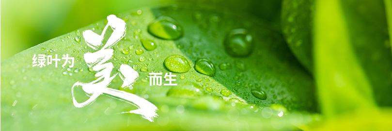 绿叶为美而生