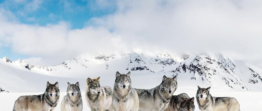 狼性直銷團隊怎么打造-直銷同城網