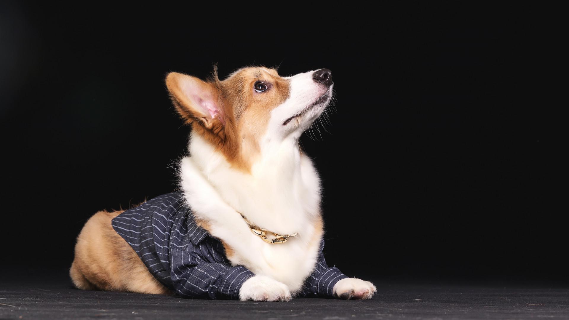 养狗家庭如何做好除臭工作?