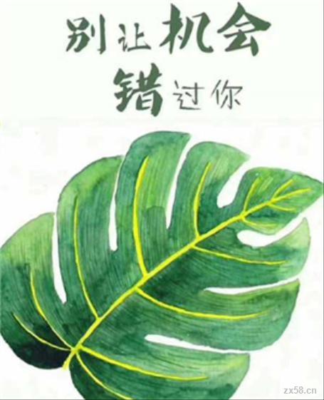 绿叶秦女士