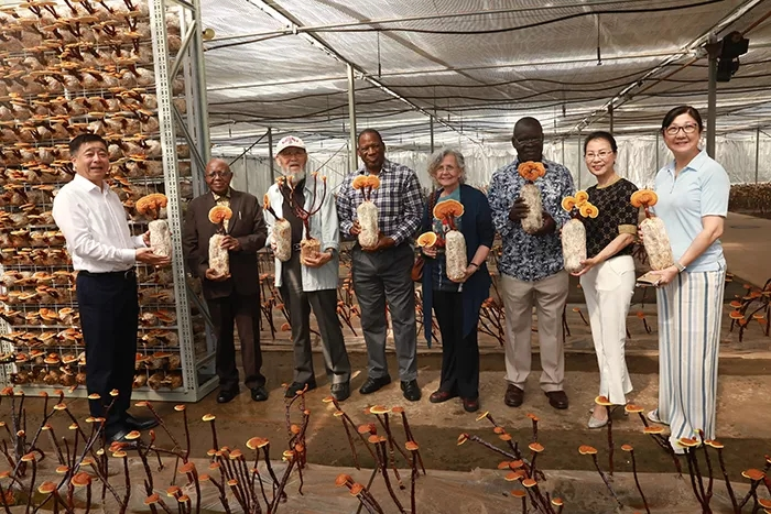 安惠团队-小蘑菇大产业