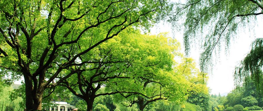 直销的大树理论:向上、扎根、累积-直销同城网