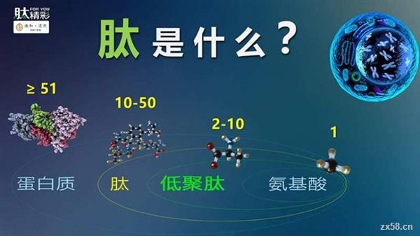 富迪小分子肽产品