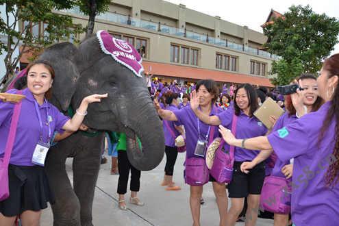 伙伴們與大象互動